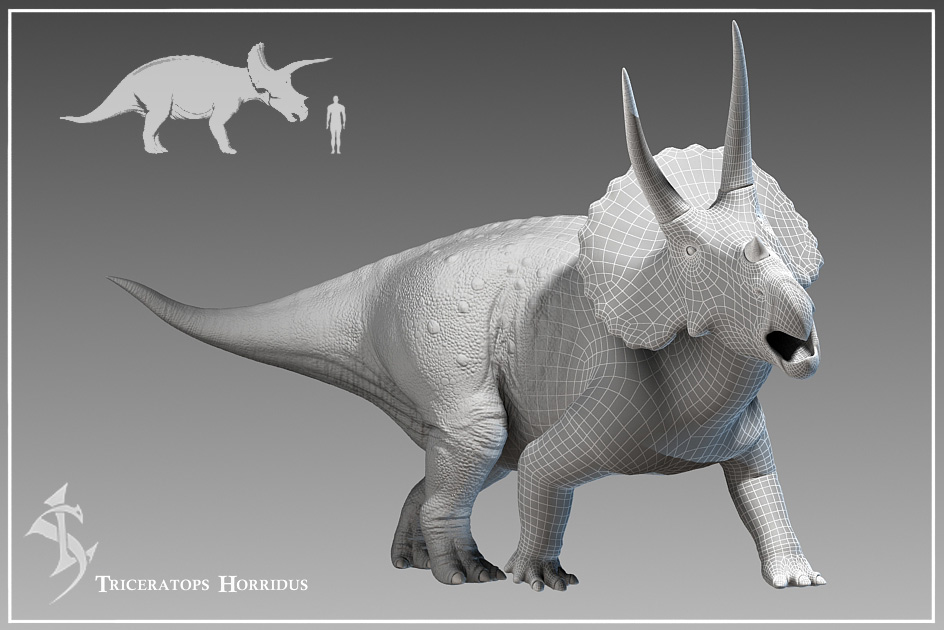 an overview and anatomy of triceratops hottidus in the world of dinnosaurs In the first overview of horned dinosaurs degree from the original triceratops, named t horridus by in ornithopod dinosaurs advances in anatomy.