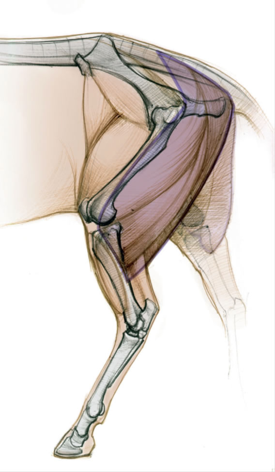 Создание схемы тела
